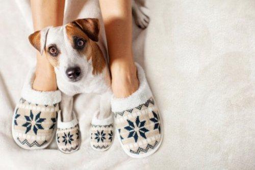 Come mantenere al caldo il cane durante l'inverno