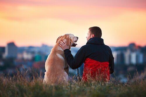5 cani più fedeli della storia che dovete conoscere