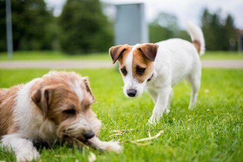 saluto fra cani