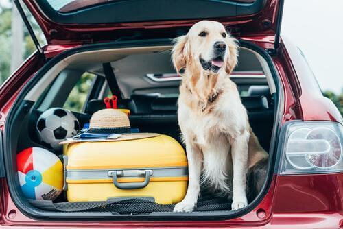 Suggerimenti per portare un animale domestico in vacanza