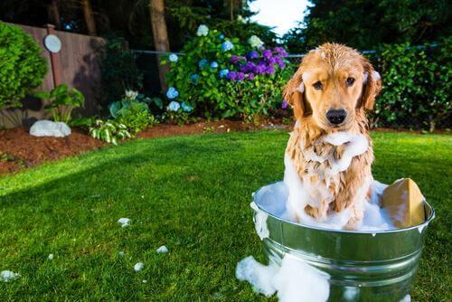 Lavare il cane in giardino