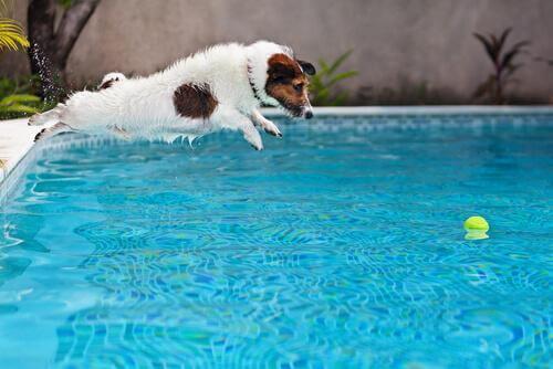 cane si bagna in piscina