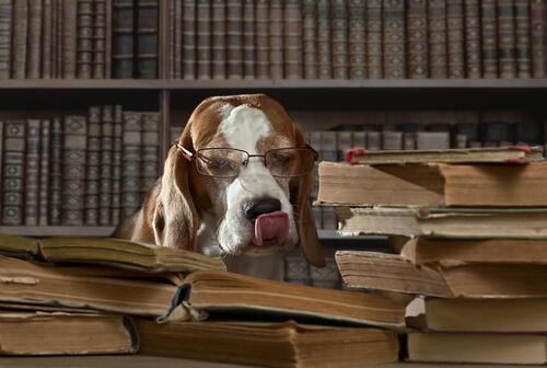 Cane con occhiali in biblioteca tra i libri