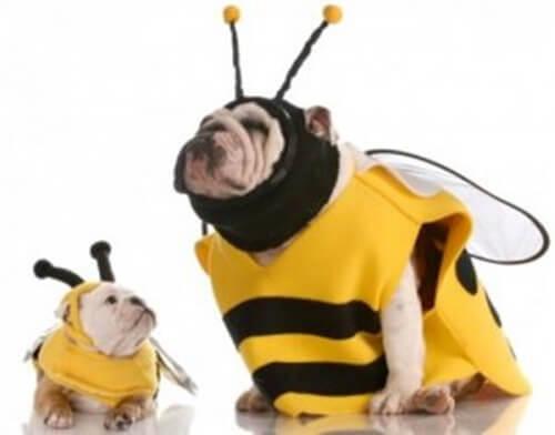 Consigli per scegliere un costume per il vostro cane
