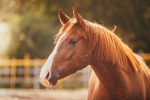 Cavallo nel recinto