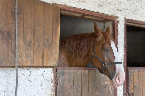 Cavallo riposa