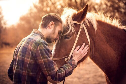 Come capire se il vostro cavallo vi vuole bene?