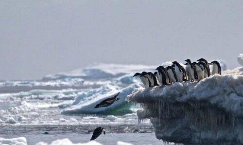 Il cimitero di pinguini in Antartide