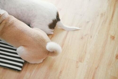 Tutto quello che dovete sapere sul saluto fra cani