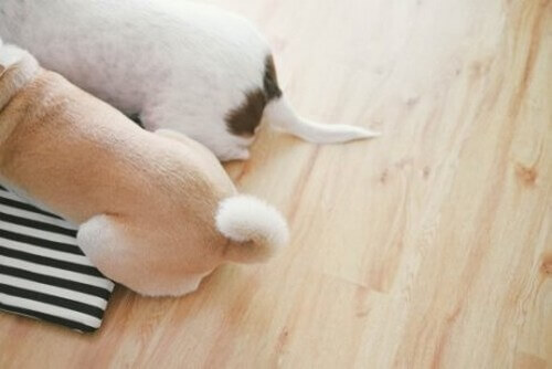 Come comunicano i cani usando la coda