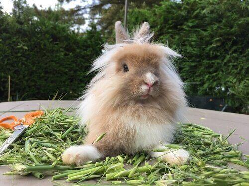 Coniglio e verdure