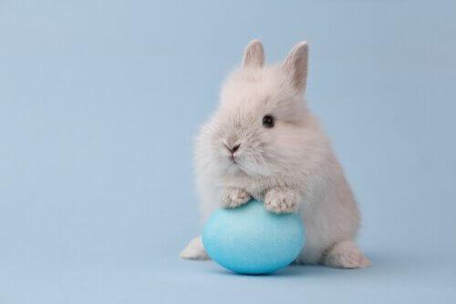 Coniglio che gioca