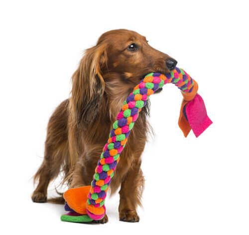 Corda massaggiagengive per cane
