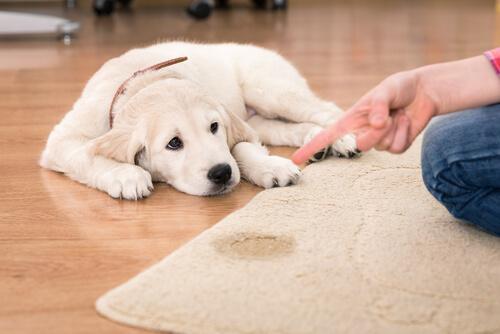 Padrone sgrida cucciolo di cane