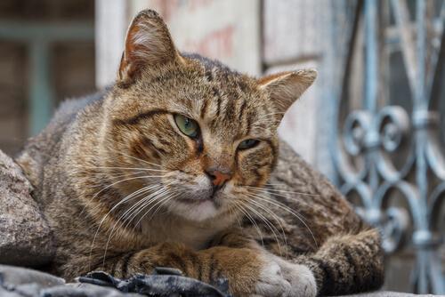 Demenza senile nei gatti trattamento
