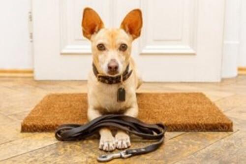 Educare un cane: 7 errori da non commettere