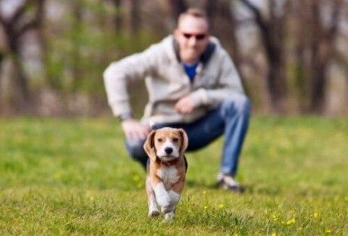 Come evitare di perdere il cane durante una passeggiata