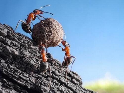Curiosità sulle formiche