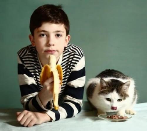 Che frutta possono mangiare i gatti?