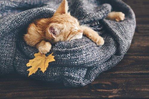 Gatto arancione che dorme