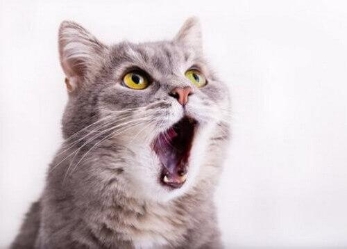 Per quale motivo i gatti fanno le fusa?