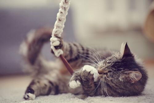 Gatto che gioca con corda sul tappeto
