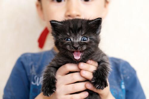 Gatto nero piccolo in braccio a bambino