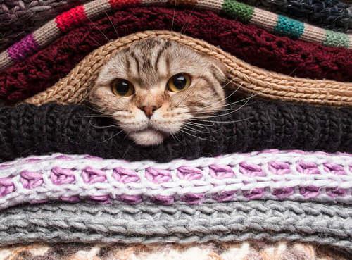 Gatto sotto i maglioni