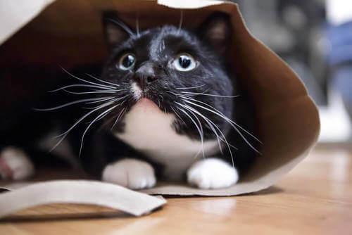 Gatto spaventato si nasconde