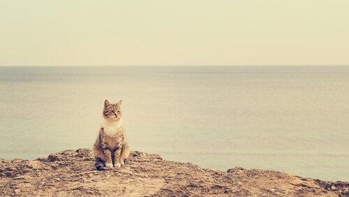 Gatto in spiaggia