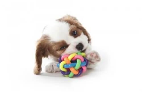 4 consigli per scegliere un giocattolo massaggia gengive per il cane