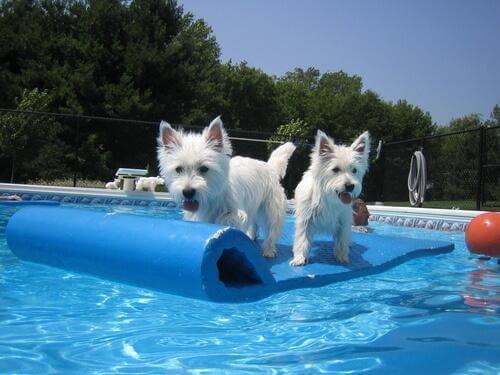 Giochi da fare in piscina con il cane