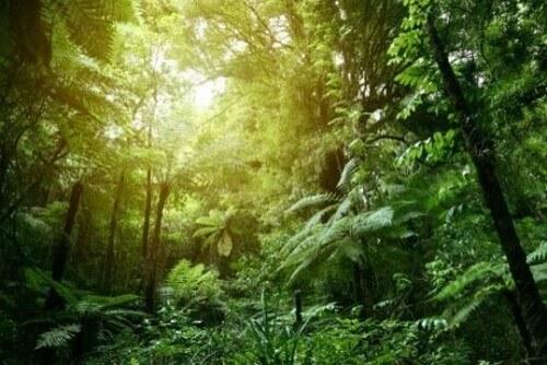 Temperatura e habitat nella giungla