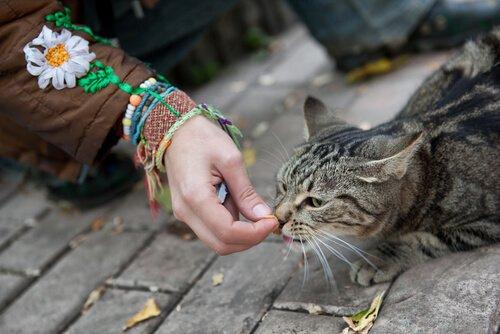 Come guadagnarsi la fiducia di un gatto randagio