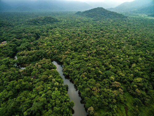 I tipi di giungla
