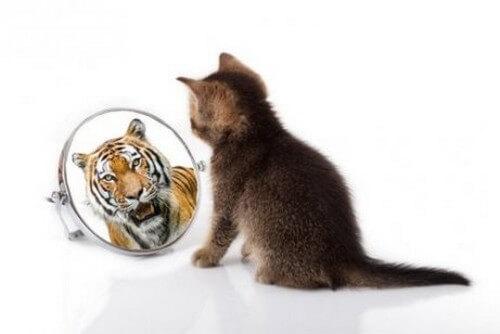 Somiglianze fra il gatto e la tigre