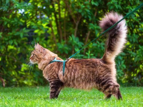 Scopriamo il linguaggio della coda dei gatti