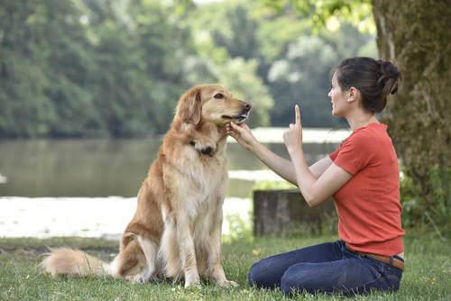 Insegnare al cane