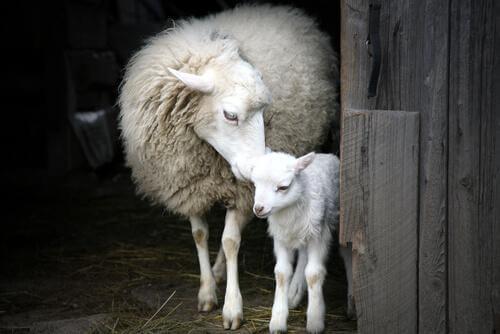 L'incredibile istinto materno degli animali