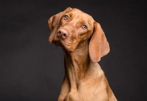 Effetti dell'alimentazione sulla pelle dei cani