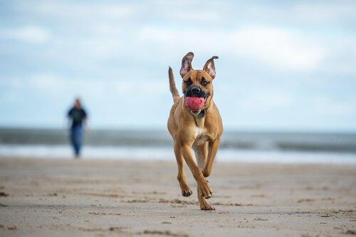 Le migliori spiagge spagnole pet friendly