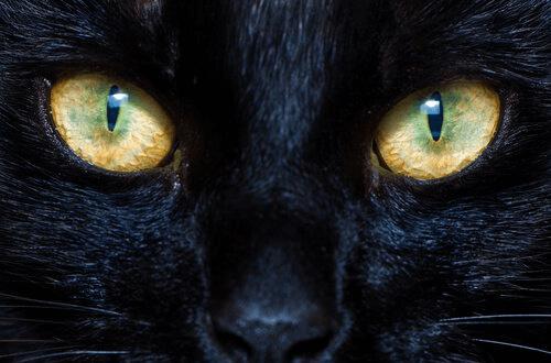 Il funzionamento delle pupille in cani e gatti