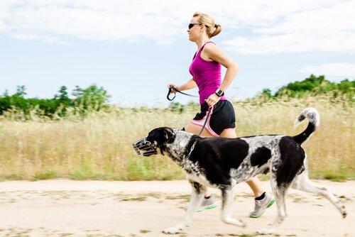 padrona fa jogging con cane con la museruola
