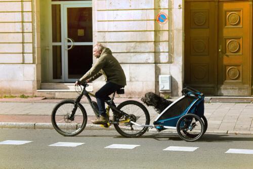 Padrone che porta cane con rimorchio da bici