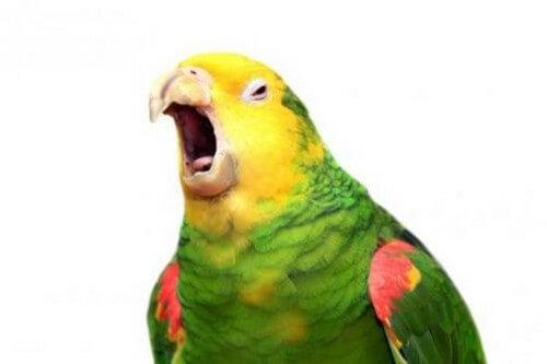I pappagalli capiscono ciò che dicono?