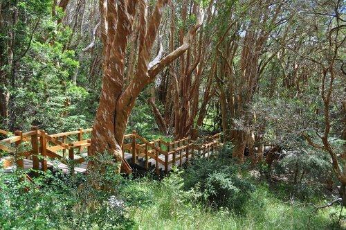 Parco nazionale Los Arrayanes