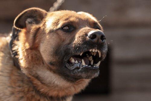 Scopriamo perché i cani possono attaccare