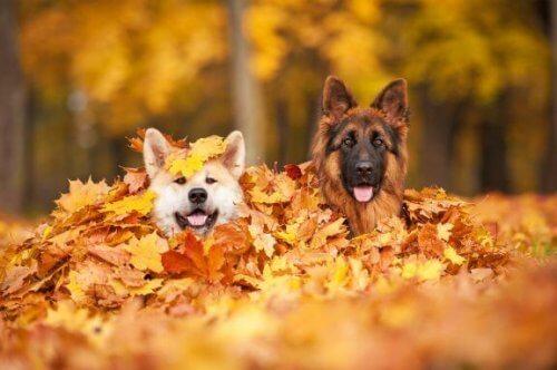 5 pericoli dell'autunno per i cani: attenzione!