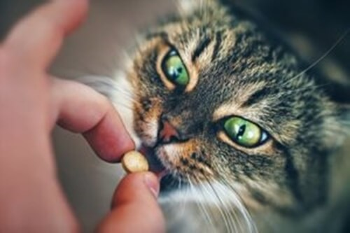 Trucchi e consigli per dare le pillole al gatto
