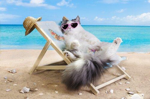 Posso portare il gatto in spiaggia?